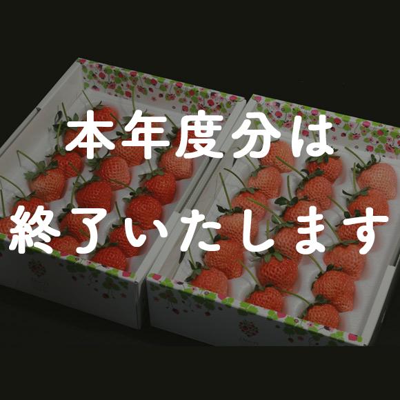 ご家庭用 いちご「桃薫」18個×2箱の特産品画像