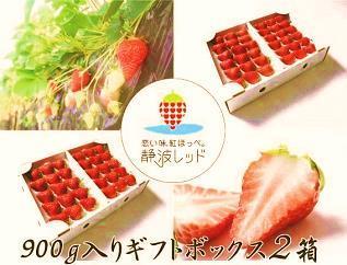 「まきのはら発ブランドイチゴ、【恋い味、紅ほっぺ。静波レッド】贅沢ギフトセット」の特産品画像