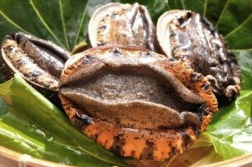 伊豆漁協直送「肉厚獲れたてアワビ」(限定100セット)の特産品画像