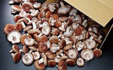 椎茸大量てんこ盛りセットの特産品画像