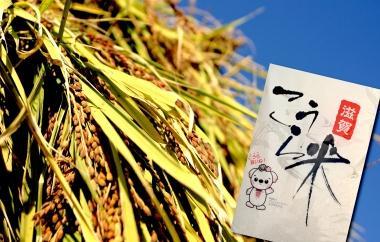 平成28年産 甲良米 「キヌヒカリ」 白米45kgの特産品画像