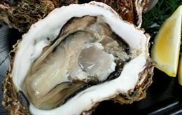鳥取賀露港 天然岩がきセットの特産品画像