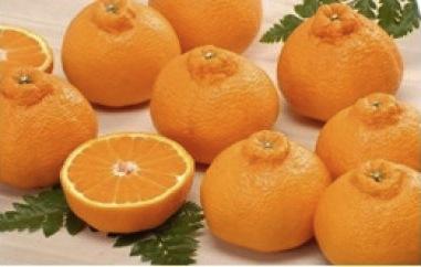 みさき果樹園のデコ媛の特産品画像