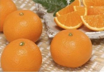 みさき果樹園の清見タンゴールの特産品画像