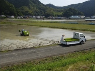 【新米】宿毛産ヒノヒカリ 15kgの特産品画像