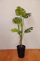 モンステラ(造花)の特産品画像