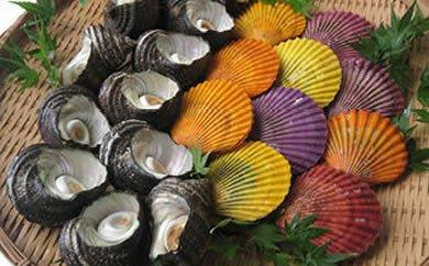 豊後水道の極み 蒲江産養殖緋扇貝・蒲江産サザエのセットの特産品画像